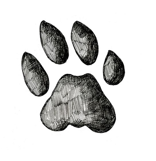 BOBCAT TRACK STAMP (Front Right Foot).