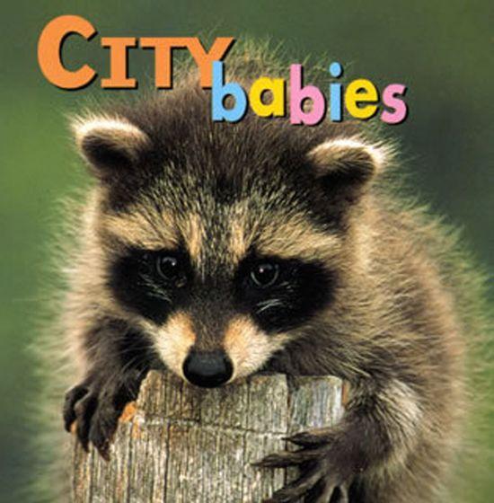 City Babies (Board Book)