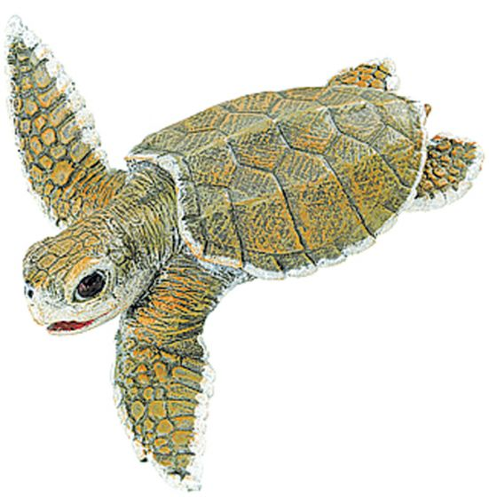 Sea Turtle (Baby Ridley) Model