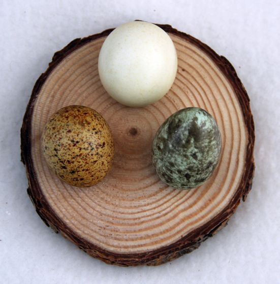 Natural Pine Egg Stand (Three Medium Holes On One Round).