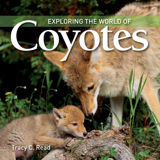 Exploring the World of Coyotes
