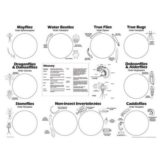 """Freshwater Invertebrate Sorting Sheets (from the Stream Ecology Kit """"Leaf Pack"""")"""