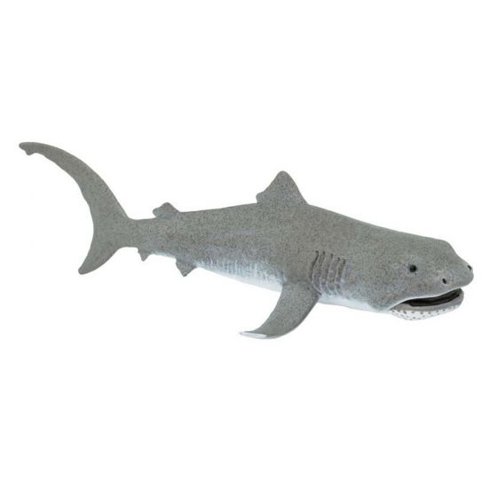 Shark (Megamouth) Model