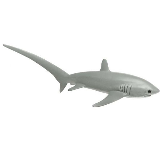 Shark (Thresher) Model