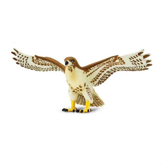 Hawk (Red-Tailed) Model