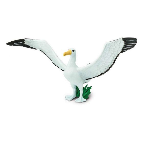 Albatross (Giant) Model