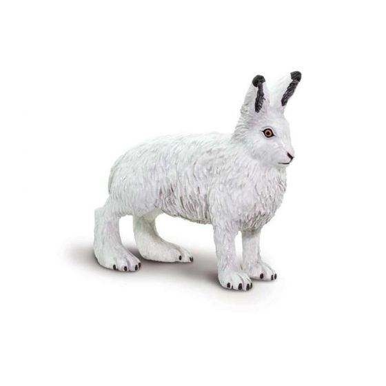 Arctic Hare Model