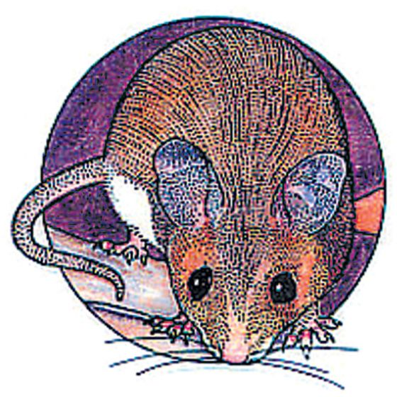 Mouse Rubber Stamp