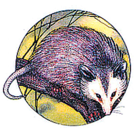 Opossum Rubber Stamp