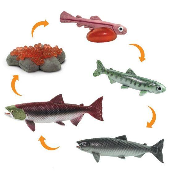 Salmon Life Cycle Models Set