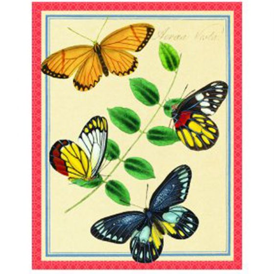Asian Butterflies (Boxed Notecards)