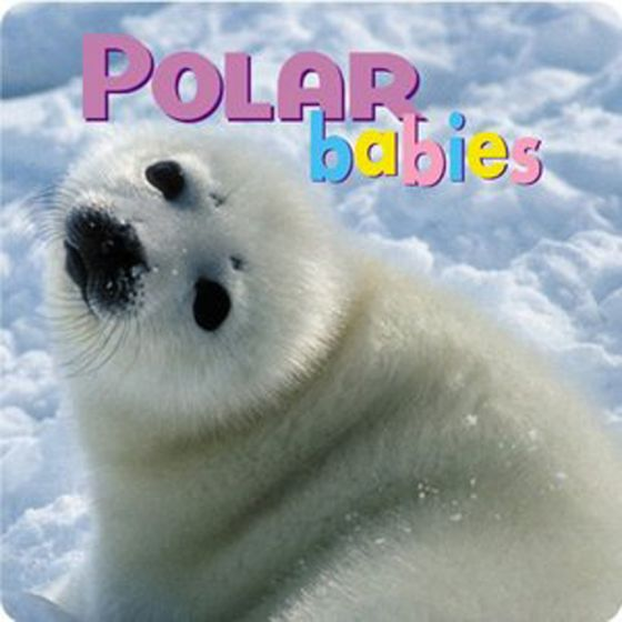 Polar Babies (Board Book)