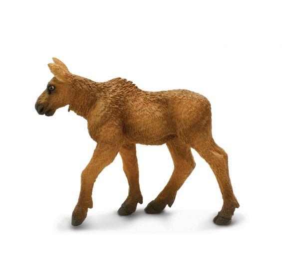 Moose Calf Model