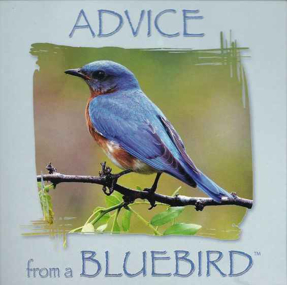 Advice From A Bluebird™ Wing Tips™ Greeting Card.