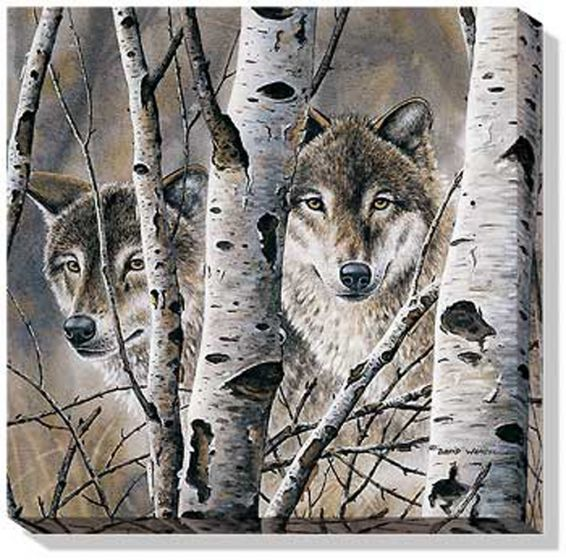 Wolves Fleeting Glimpse Wall Canvas