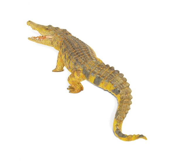 Crocodile (Saltwater) Model