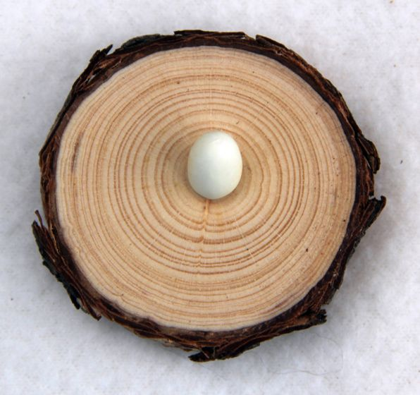 Natural Pine Egg Stand: Extra Small.