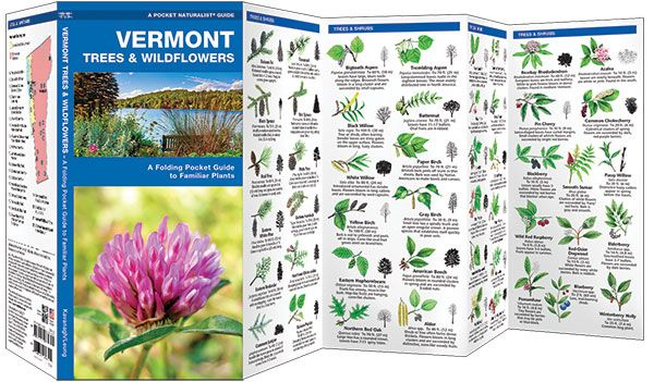 Vermont Trees & Wildflowers (Pocket Naturalist® Guide)