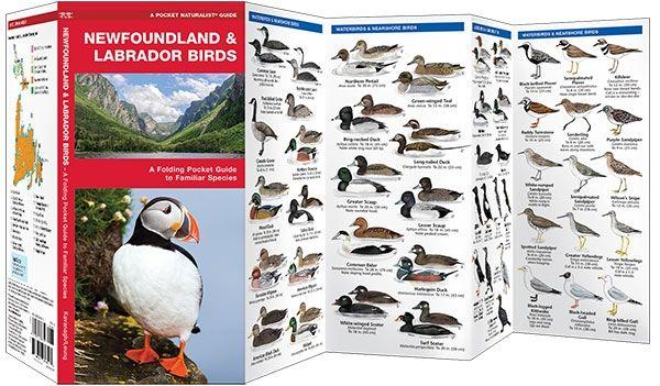 Newfoundland & Labrador Birds (Pocket Naturalist® Guide)