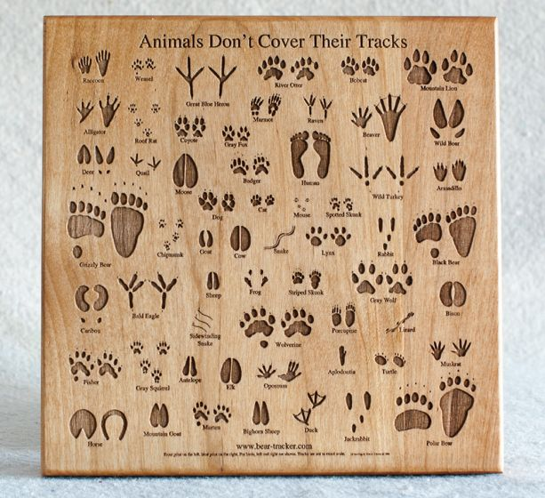 Animal Track Wooden Plaque (Medium).