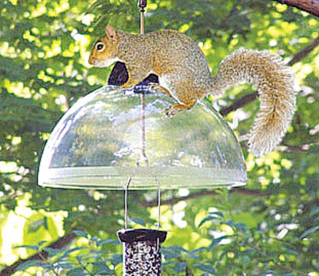 Clever Clean 15 Squirrel/Rain Baffle