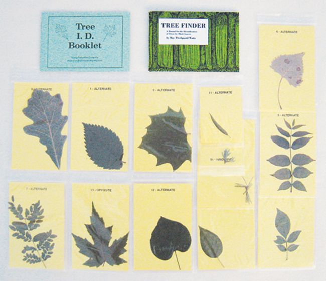 Tree Identification Kit.