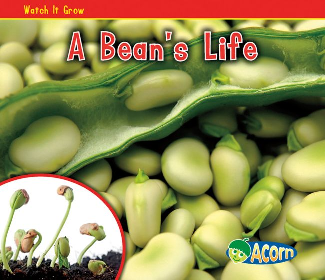 Bean's Life