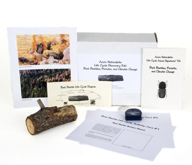 Life Cycle Discovery Kit®: Bark Beetles