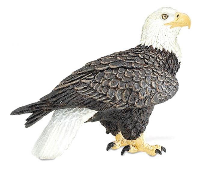 Eagle (Bald) Model
