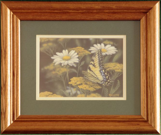 "Butterfly ""Tiger Swallowtail"" Framed Print."