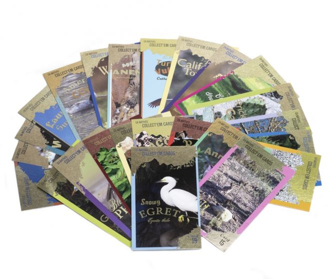 California Natives Trading Card Set (24 Random Cards in Acrylic Box)
