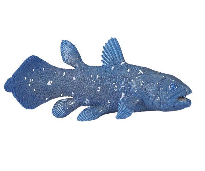 Coelacanth Model