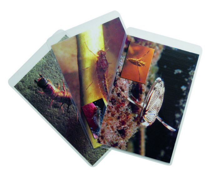 Leaf Pack Set Of 18 Flash Cards (From Stream Ecology Kit).