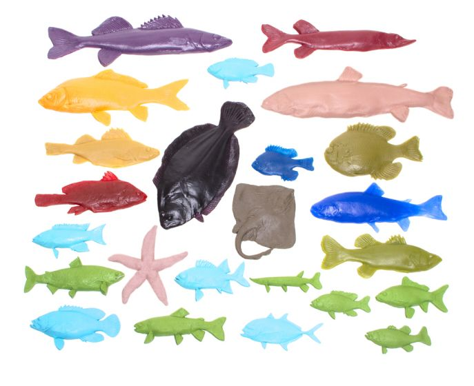 Fish Printing Replicas Collection (Discounted Set of All 24 Fish Replicas)