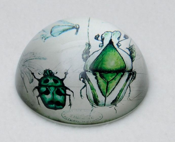 Beetle Glass Paperweight