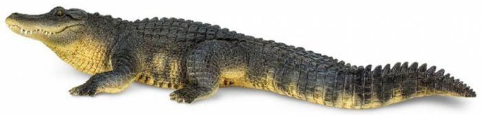 Alligator Model