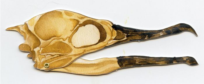 Cormorant Skull Model®.