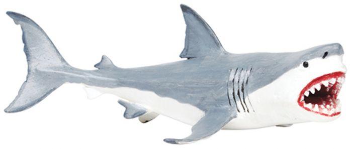Megalodon Model.
