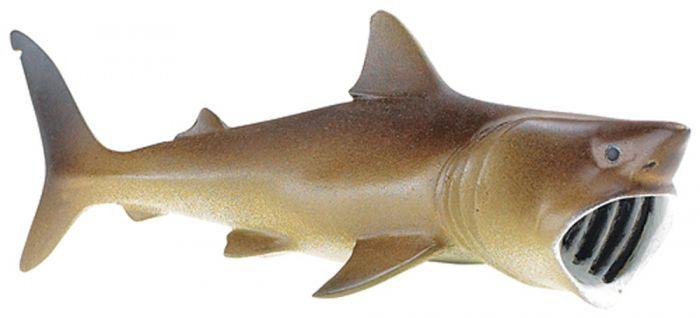 Shark (Basking) Model
