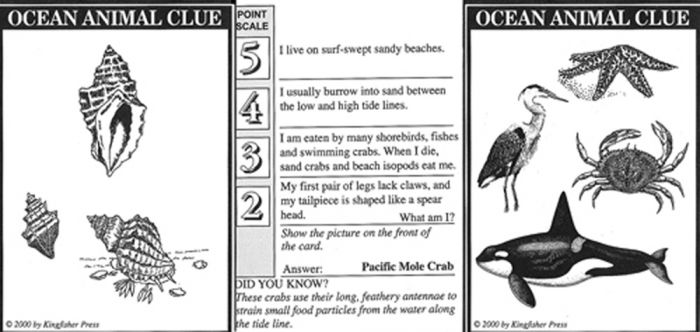 Ocean Animal Clue Cards (Once Upon A Seashore)