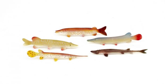 Freshwater Fish Model Collection (Discounted Set of 5 Models)