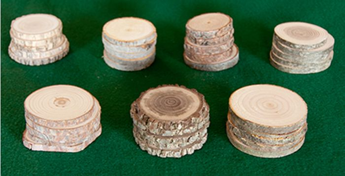 Botanical Grade Tree Rounds: Eastern Classroom Set (5 Each Of 6 Varieties