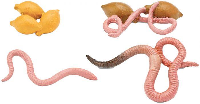 Earthworm Life Cycle Models.