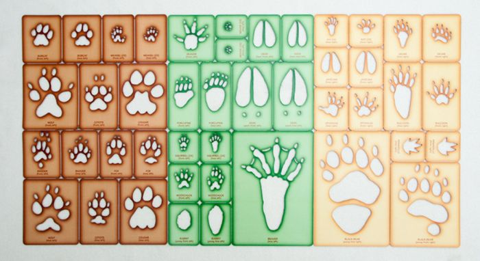 Trace-A-Track® Collection: 3 Dietary Sets (21 Species).