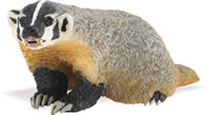 Badger Model