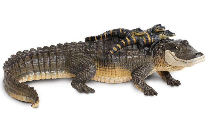 Alligator (With Babies) Model