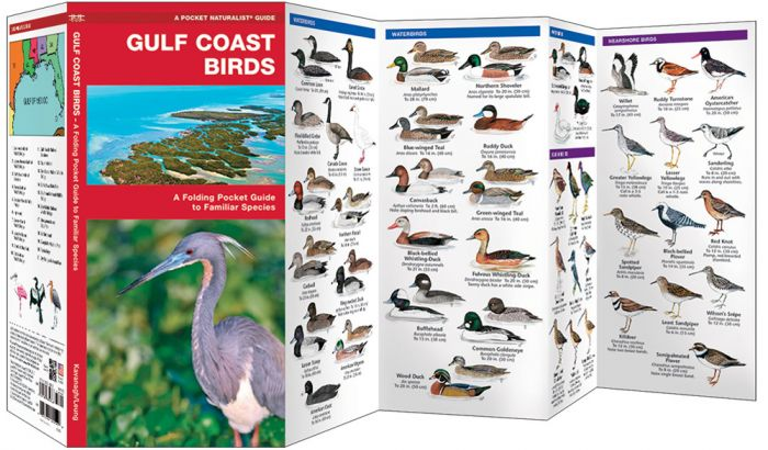 Gulf Coast Birds (Pocket Naturalist® Guide).