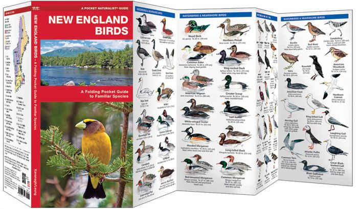 New England Birds (Pocket Naturalist® Guide).