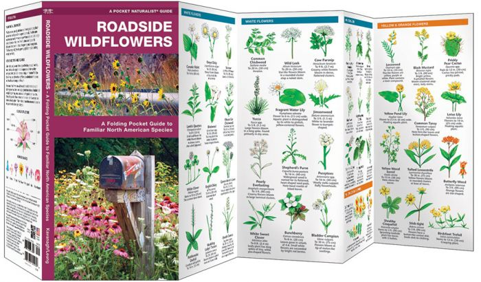 Roadside Wildflowers (Pocket Naturalist® Guide).
