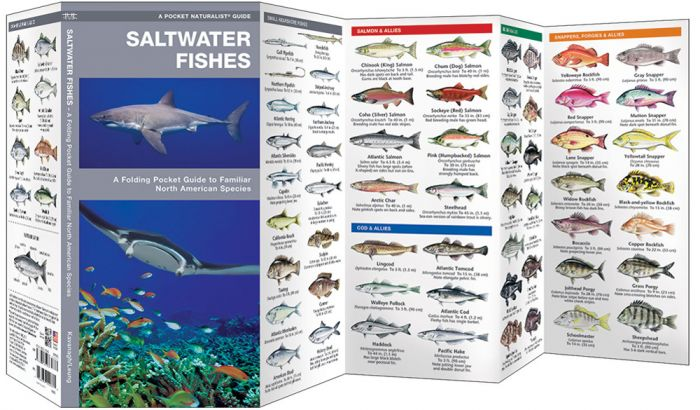 Saltwater Fishes (Pocket Naturalist® Guide).